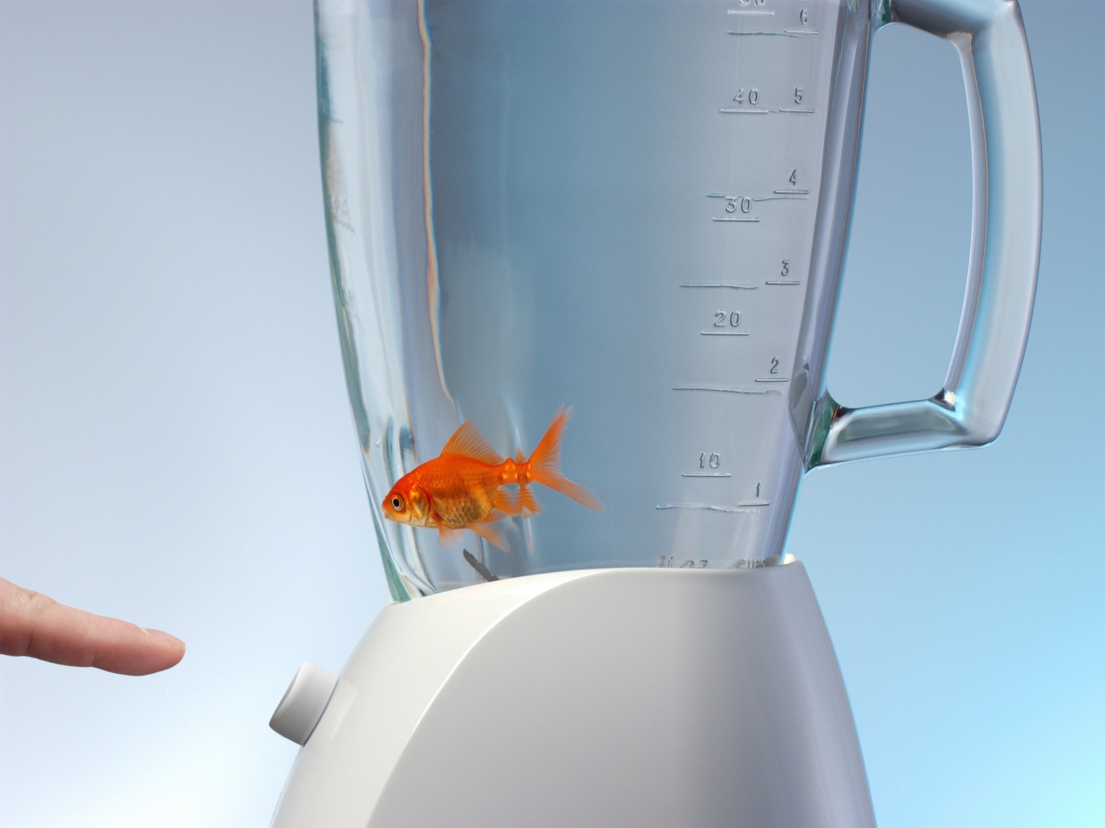 Fish in blender about to be startedcopyright bill frymire for Fish in a blender