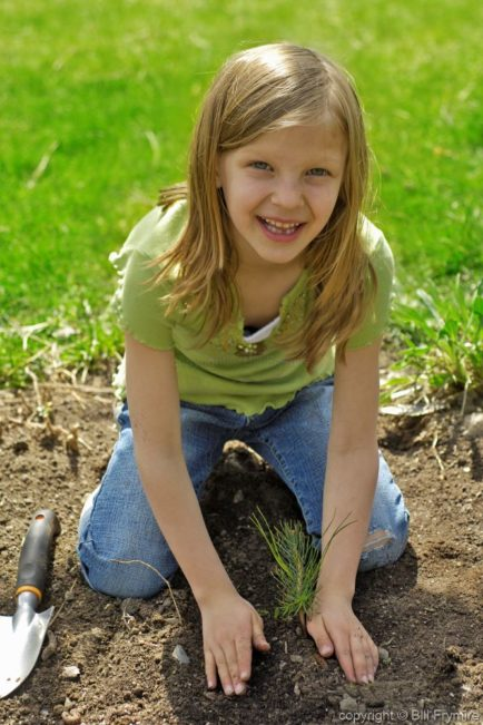 young girl planting a pine tree